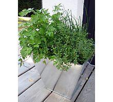 Herbs Photographic Print