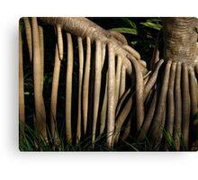 Pandanas Roots Canvas Print