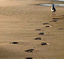 Not my Footprints by Jason Dymock Photography
