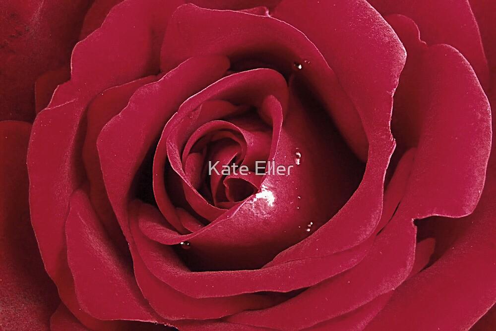 Velvety Rose by Kate Eller