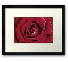 Velvety Rose Framed Print