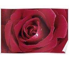 Velvety Rose Poster