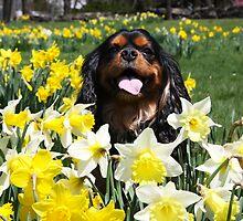 Maximus Among The Daffodils by daphsam