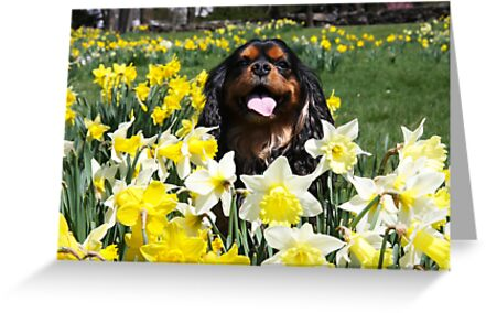 Maximus Among The Daffodils by daphsam