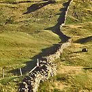 Dry Stone Wall, from Here to There by David Davies