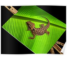 Lizard on Canvas Poster