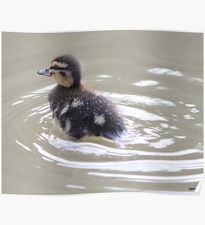 duckling in a hurry  Poster