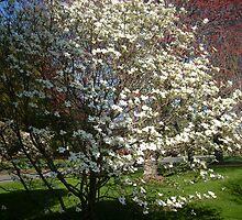Blooming Spring by lindsaywinckel