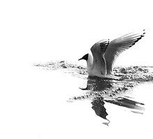 Disturbance On Crystal Water by Simon Pattinson