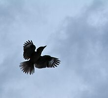 Kookie in Flight by Lianne Wooster