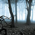 Misty Woodland & Light by johnfinney