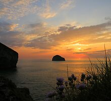 Cornwall: Sea Pinks at Sunset by Rob Parsons