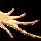 Take My Hand by Melissa Ann Blair