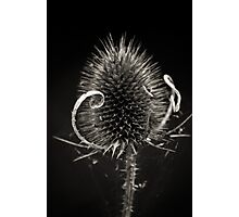 Curves and Spikes Photographic Print