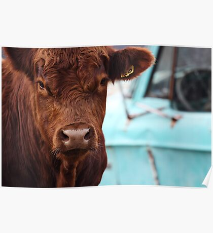 Bull Showdown Poster