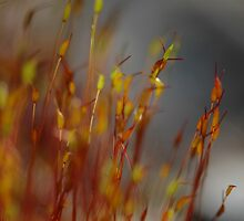 Moss on my well roof by Jeff Burgess