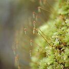 Moss on a Tree at Tahuya, Washington by Jeff Burgess