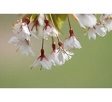 Spring in Washington State-11 Photographic Print