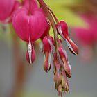 Spring in Washington State-12 by Jeff Burgess