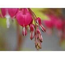 Spring in Washington State-12 Photographic Print