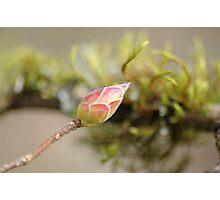 Spring in Washington State-13 Photographic Print