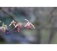 Spring in Washington State-15 Photographic Print