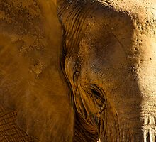 Elephant by Eric  Williamson