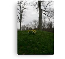 Spring on the Hill Canvas Print