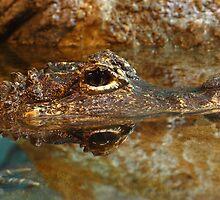 chinese alligator by FLLETCHER