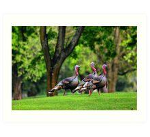 Golf Course Turkeys Art Print