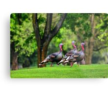 Golf Course Turkeys Metal Print