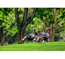 Golf Course Turkeys Photographic Print