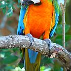 hybrid macaw by FLLETCHER