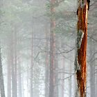 6.4.2011: Pinetree In the Misty Forest by Petri Volanen