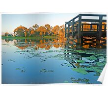 Autumn on the Lake - Nudgee Qld Poster