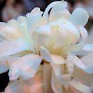 Bursting Beauty  by MylieLynn