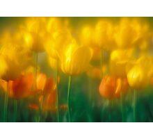 Sun Garden Photographic Print