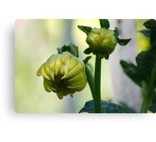 Coloured bud Canvas Print