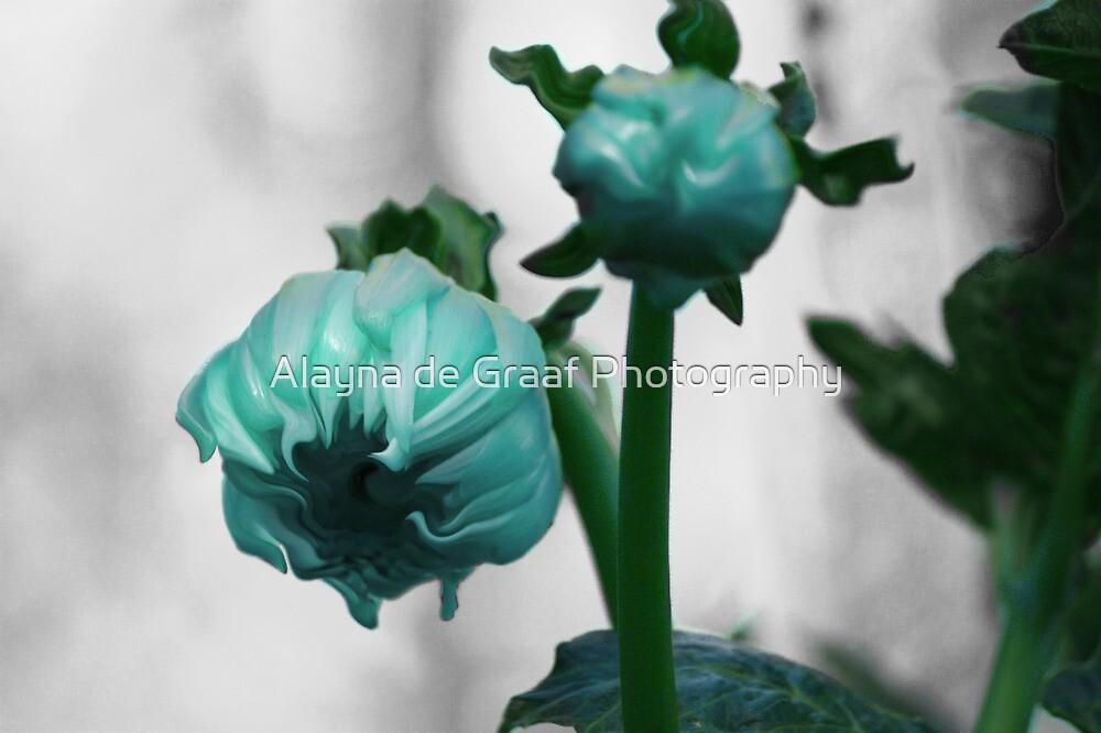Coloured bud series, cyan version by Alayna de Graaf Photography