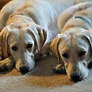 DDT- Double Dog Trouble by Sharon Elliott-Thomas