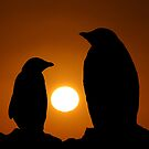 Penguins at sunset by John Dalkin