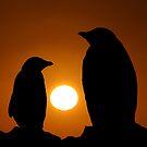 Penguins at sunset by John Dalkin