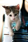 Musical Kitten by Renee Hubbard Fine Art Photography