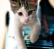Musical Kitten by Renee Hubbard Fine Art Photography