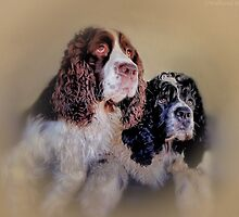The A Team  by wallarooimages