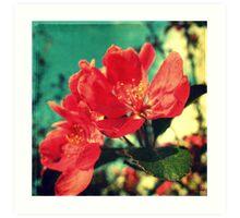 Retro Blossom Art Print