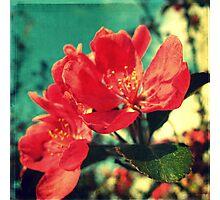Retro Blossom Photographic Print