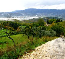 Country Road - Florence, Italy by Marilyn Harris