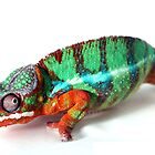 Chameleon  by PixelFarm
