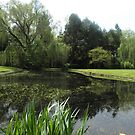 Garden Pond at Berkeley Plantation by AJ Belongia
